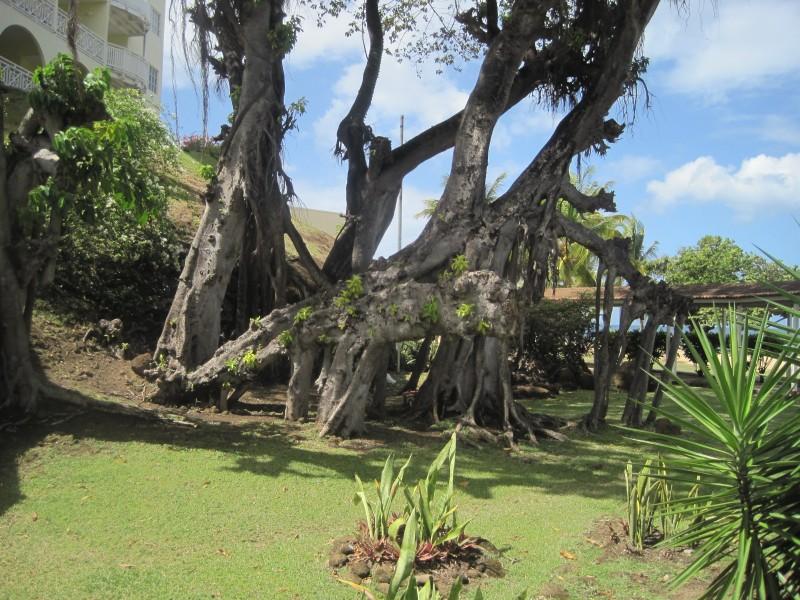 Crazy tree!