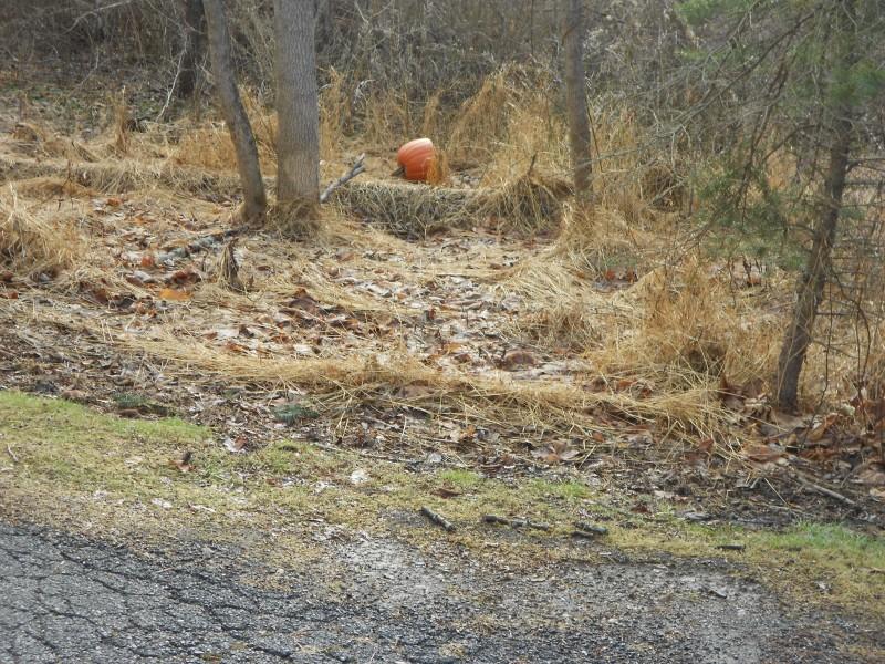 Pumpkin Depot