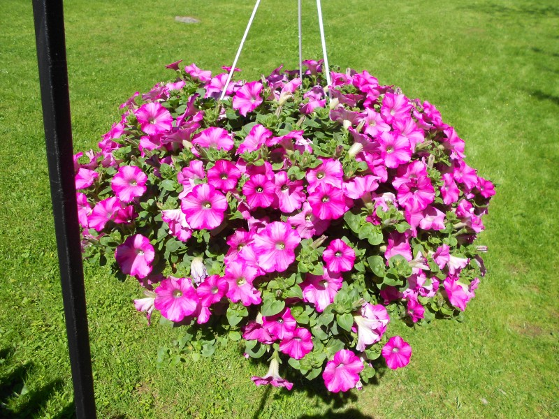 Hanging basket.